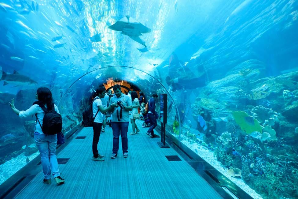 Dubai Aquarium & Underwater Zoo, The Dubai Mall